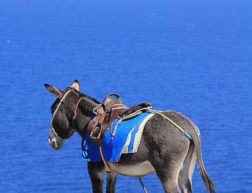 Santorini e gli asini taxi dell'isola
